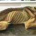 10ヶ月間飼い主に虐待され飢餓状態になった犬。この後現れた男性の行動に称賛が寄せられる